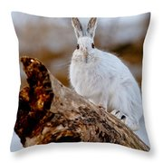 Snowshoe Hare Pictures 131 Throw Pillow