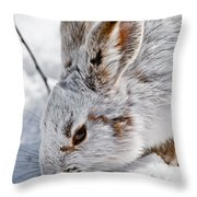 Snowshoe Hare Pictures 133 Throw Pillow