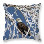 Snowy Bald Eagle Throw Pillow