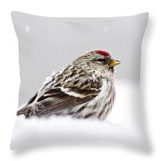 Snowy Common Redpoll Throw Pillow