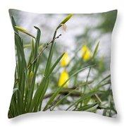 Snowy Daffodils Throw Pillow