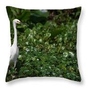 Snowy Egret 3 Throw Pillow