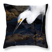 Snowy Egret Dribble Throw Pillow