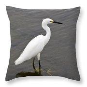 Snowy Egret  Egretta Thula Throw Pillow