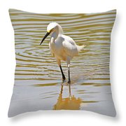 Snowy Egret Looking For Fish Throw Pillow