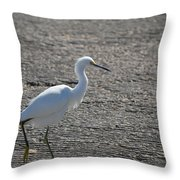 Snowy Egret Walk Throw Pillow