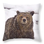 Snowy Grizzly Throw Pillow