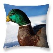 Snowy Mallard Throw Pillow