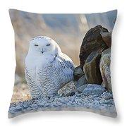 Snowy Owl Among The Rocks Throw Pillow