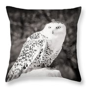Snowy Owl Cold Stare Black And White Throw Pillow