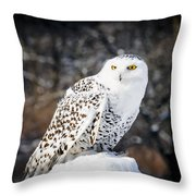 Snowy Owl Cold Stare Throw Pillow