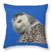 Snowy Owl Greeting Card Throw Pillow by Everet Regal