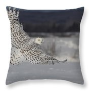 Snowy Owl In Flight Throw Pillow by Mircea Costina Photography
