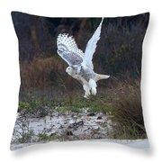 Snowy Owl In Florida 10 Throw Pillow
