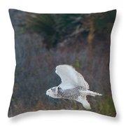 Snowy Owl In Florida 11 Throw Pillow