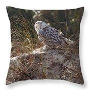 Snowy Owl In Florida 15 Throw Pillow