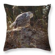 Snowy Owl In Florida 16 Throw Pillow