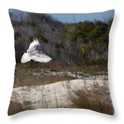 Snowy Owl In Florida 18 Throw Pillow