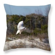 Snowy Owl In Florida 19 Throw Pillow