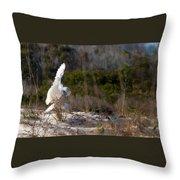 Snowy Owl In Florida 20 Throw Pillow