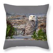 Snowy Owl In Florida 24 Throw Pillow