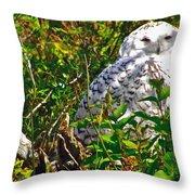 Snowy Owl In Salmonier Nature Park-nl Throw Pillow