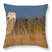 Snowy Owl Morning Throw Pillow