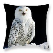 Snowy Owl On A Twilight Winter Night Throw Pillow by Inspired Nature Photography Fine Art Photography