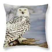 Snowy Owl On A Winter Hunt Throw Pillow by Inspired Nature Photography Fine Art Photography