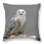 Snowy Owl On An Ice Flow Throw Pillow