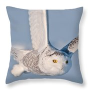 Snowy Owl Pictures 47 Throw Pillow
