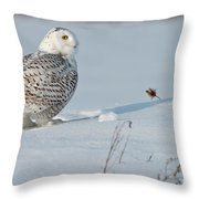 Snowy Owl Pictures 53 Throw Pillow
