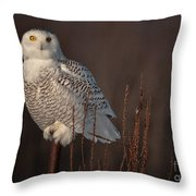 Snowy Owl Pictures 64 Throw Pillow