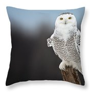 Snowy Owl Pictures 69 Throw Pillow