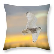 Snowy Owl Pictures 71 Throw Pillow