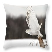Snowy Owl Pictures 80 Throw Pillow