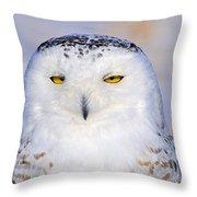 Snowy Owl Portrait Throw Pillow