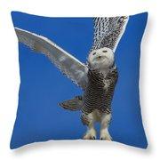 Snowy Owl Taking Flight Throw Pillow