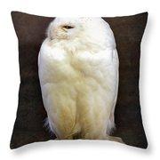 Snowy Owl Vintage  Throw Pillow