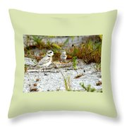 Snowy Plover And Chick Throw Pillow