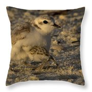 Snowy Plover Transformation Into A Spiderbird 1 Throw Pillow