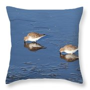 Snowy Plovers Throw Pillow