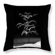Snowy Sophistication - An Elegant Fledgling Throw Pillow