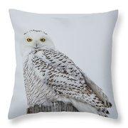 Snowy Wisdom Throw Pillow