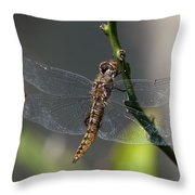 Soaking Rays Throw Pillow