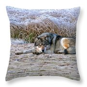 Soaking Up The Warmth 1 Throw Pillow