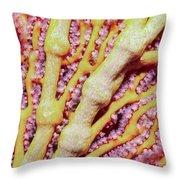 Soft Corals 1 Throw Pillow