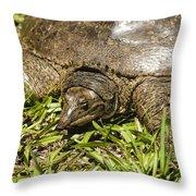 Florida Soft Shelled Turtle - Apalone Ferox Throw Pillow