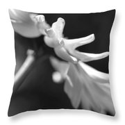 Soft Focus Daisy Flower Monochrome Throw Pillow