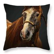 Soft Focus Horse Throw Pillow